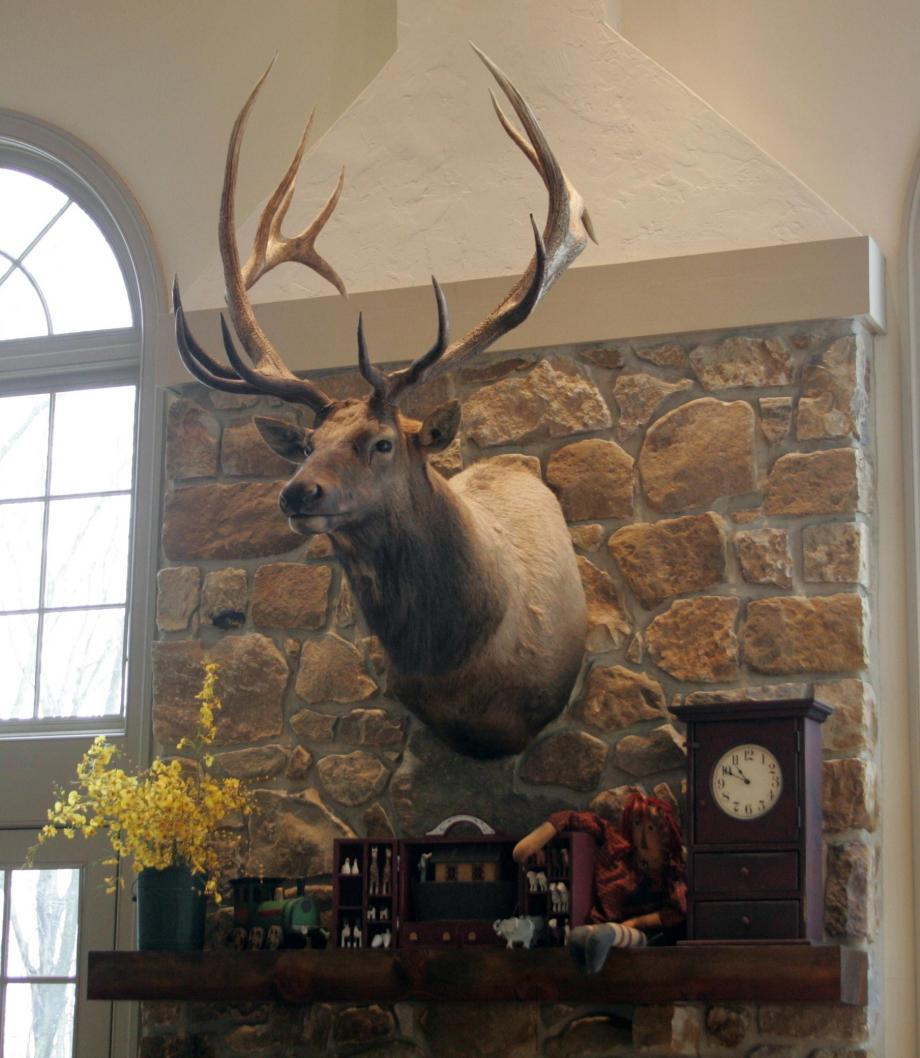 Elk Over the Mantle