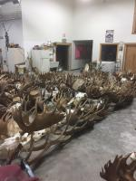Skulls and Antlers